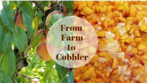 From farm to cobbler-5